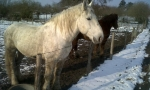 cousin_chevaux